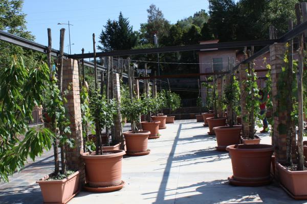 giardino-mida